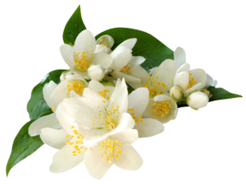 Jasmine and Neroli Extract Face Mask - 圖片
